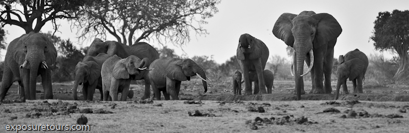 Amboseli Elephants - safari tours toronto (5)