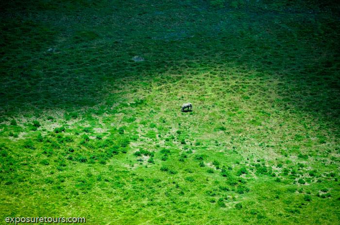 aerial photo safari - exposure tours safari tours toronto (5)