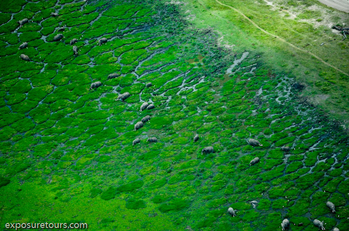 aerial photo safari - exposure tours safari tours toronto (6)