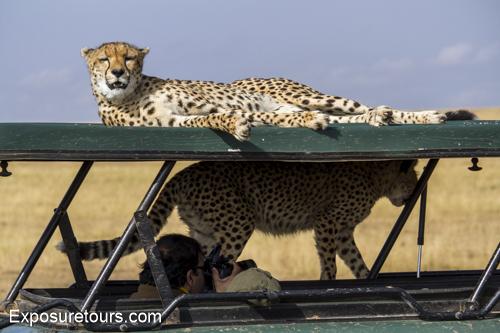cheetah ecounter african safari (11)