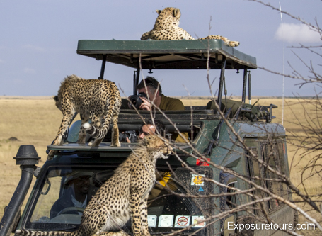 cheetah ecounter african safari (9)