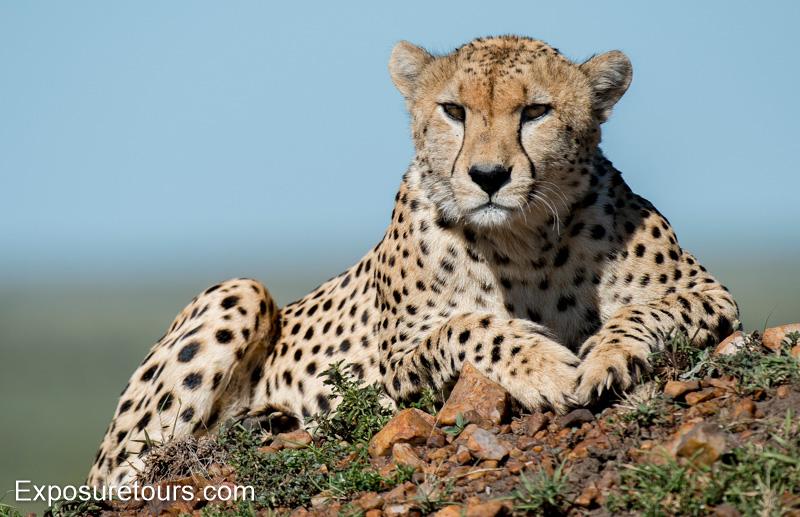 mara collection - photo safari tours toronto (1)