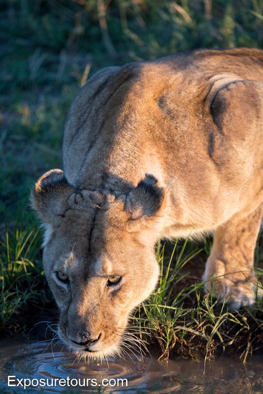 mara collection - photo safari tours toronto (2)