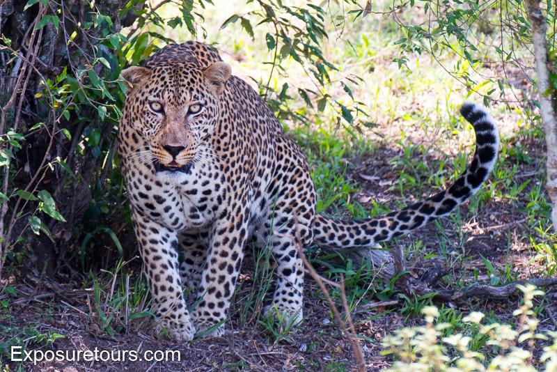 mara collection - photo safari tours toronto (3)