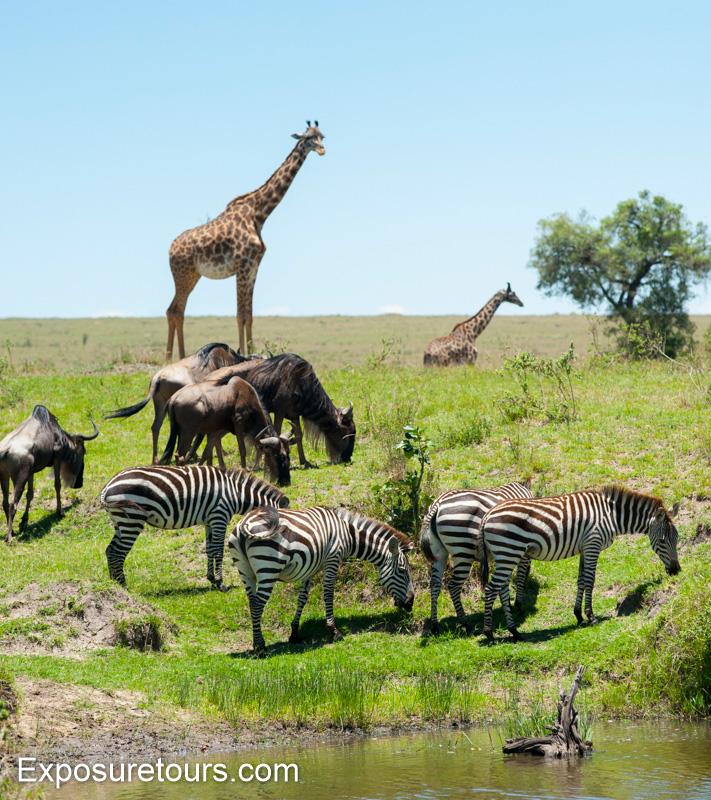 mara collection - photo safari tours toronto (5)