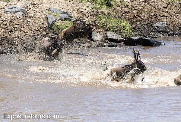 mara collection - photo safari tours toronto (7)